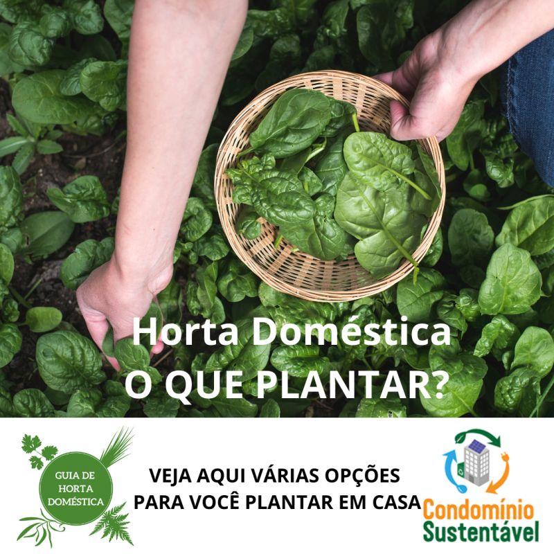 Horta POST 5 O QUE PLANTAR_
