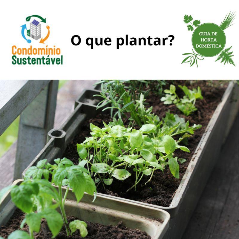 Horta Post 6 O que plantar II